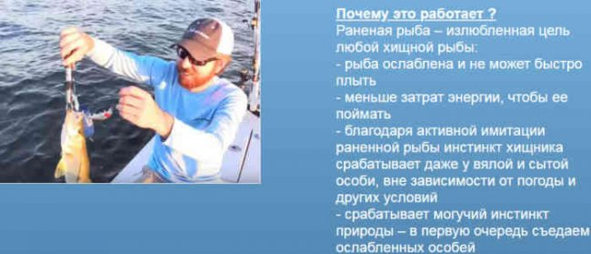 Приманка для рыбалки